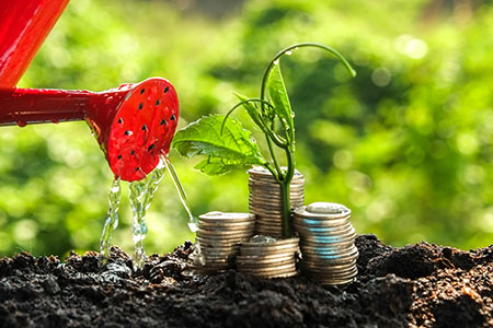 plant being watered to grow your wealth creation
